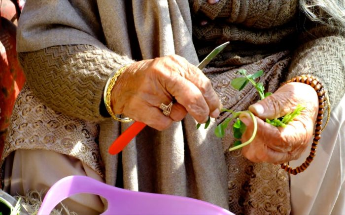 Hands of an old woman dressed warmly, prepping vivid green coriander with a red-handled knife next into a lavender plastic bowl.  She is wearing golden and wooden jewellery.