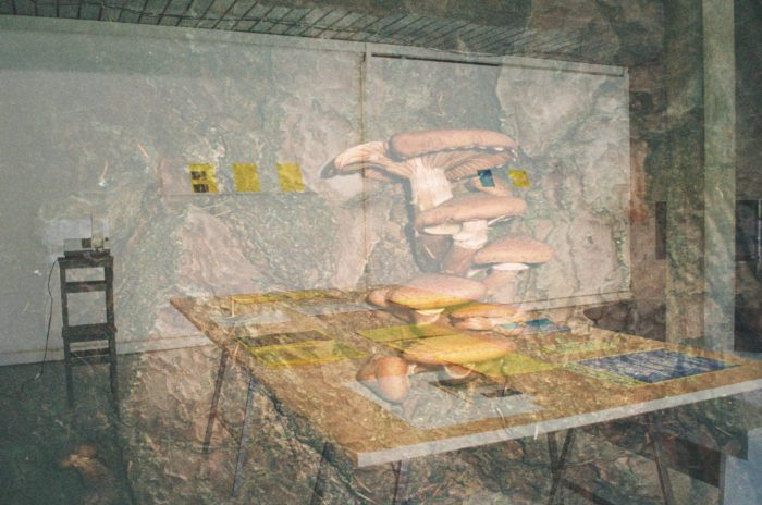 An image of mushrooms growing, overlaid over an image of a gallery with a table with trestles set out with resources on it.
